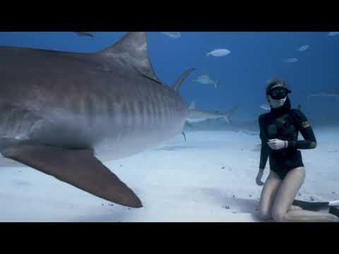 Close Encounter With Tiger Shark!!!