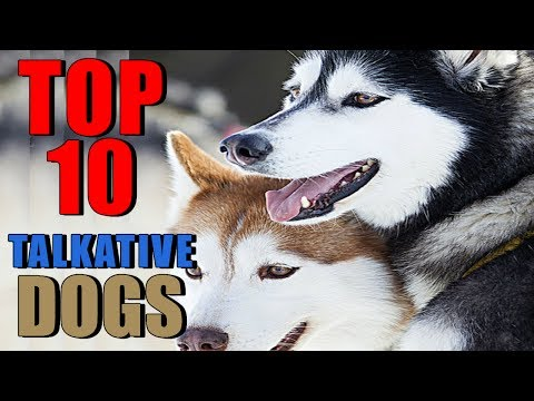 TOP 10 TALKATIVE DOG BREEDS OWNING A DOG