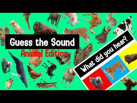 Guess The Animal Sound Game   Animal Sounds Quiz