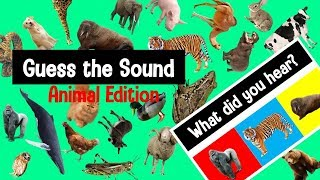 Guess the Animal Sound Game | Animal Sounds Quiz