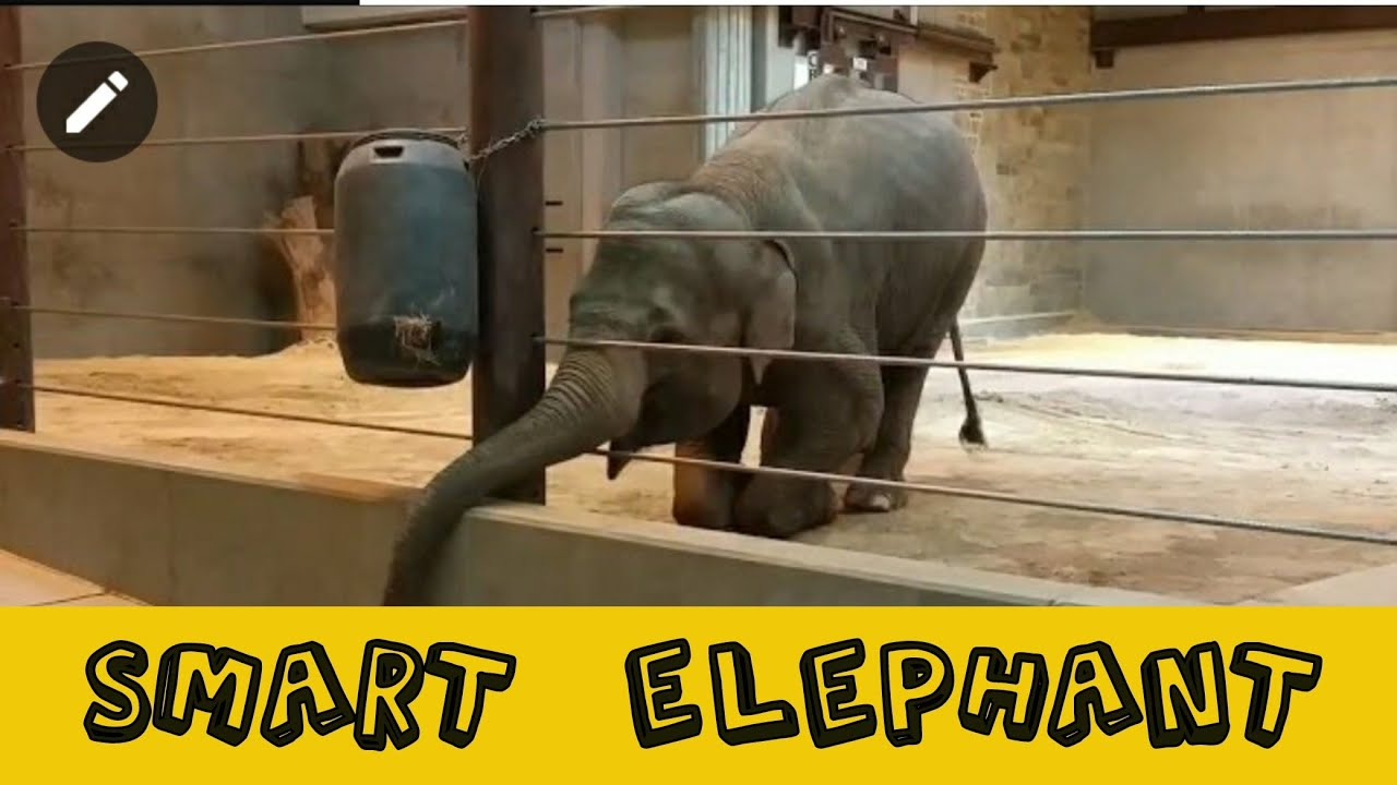 Testing Elephants Intelligence | Smart and Adorable Elephant | Wildlife Videos