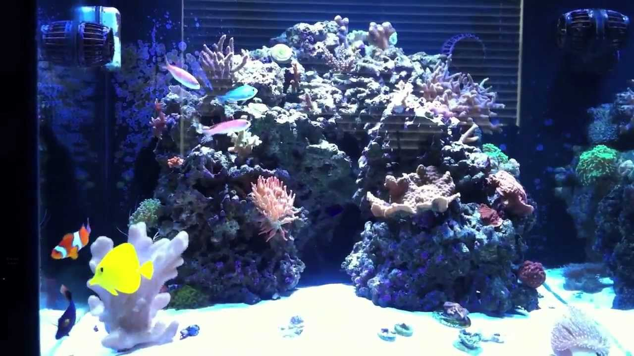 93g cube reef youtube for Cube saltwater fish tank