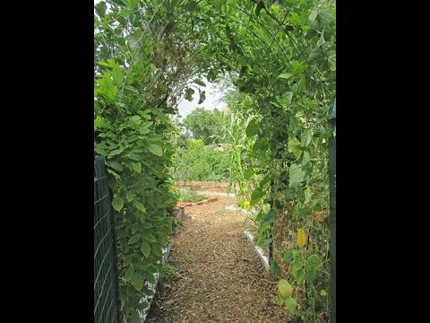Growing Plants Vertically Using A Simple Low Cost DIY Garden Arbor