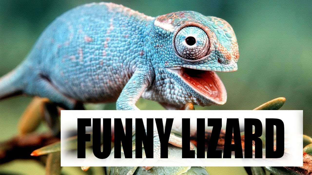 Funny and Cute Lizard/ Reptile | Try Not To Laugh Video 2018