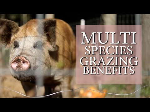 Multi Species Grazing Benefits