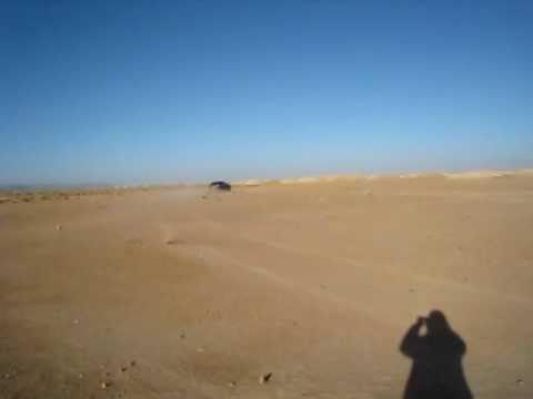 Cayenne en los pozos de aguas de Erfoud (Marruecos)