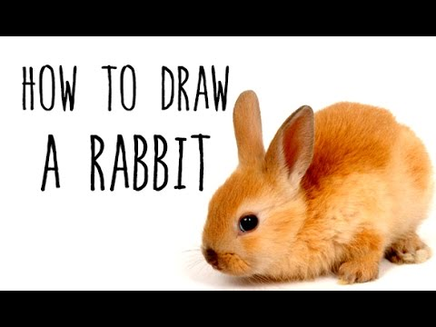 How to draw a Rabbit - drawing animals with kids - YouTube