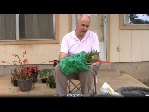 Topsy Turvy Tomato Planter Review