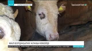 Шығыс Қазақстан облысында мал бордақылау алаңы көбейді