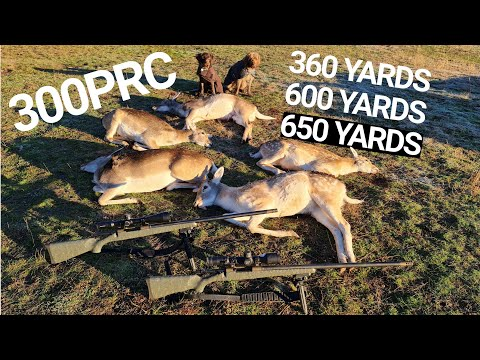 3, 2, 1, BANG BANG – 300PRC Long Range Fallow DEER Hunting