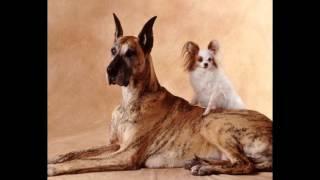 innova evo корм для собак(, 2014-10-20T18:40:17.000Z)
