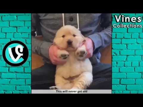 Thumbnail: Ridiculousness Vines | Best Vine Compilation June 2016 | with TITLEs