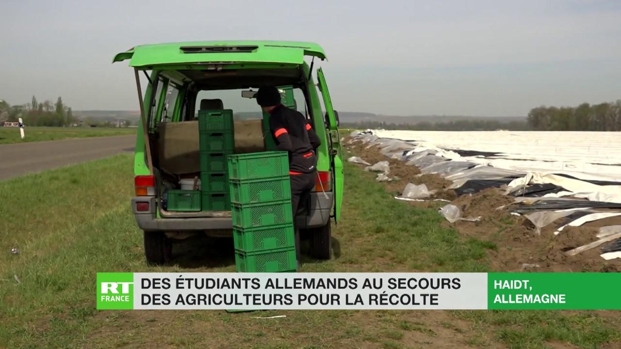 Allemagne : les étudiants au secours des agriculteurs