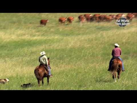 Cowboys of Nebraska - Cattle Drive at Bowring Ranch from Above (HD)