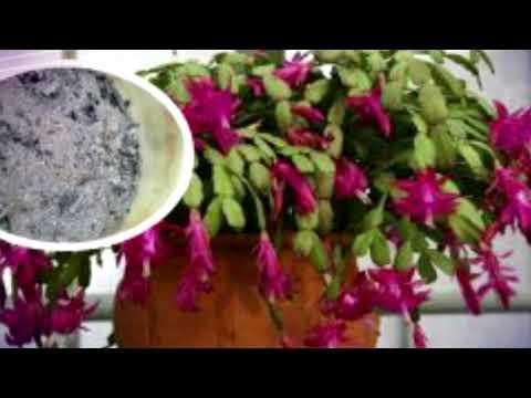 Супер удобрение для растений! Ваш цветок скажет вам спасибо!