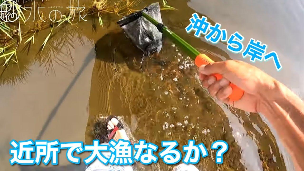 【夏休みの遊び方】近所の川で15分ガサガサしたら、想像以上に魚が入った。【水の旅# 74】