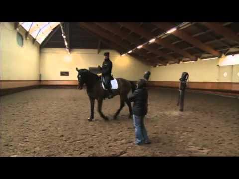 EXTRAIT - Baucher ostéopathe : équitation et ostéopathie - Equidia Life