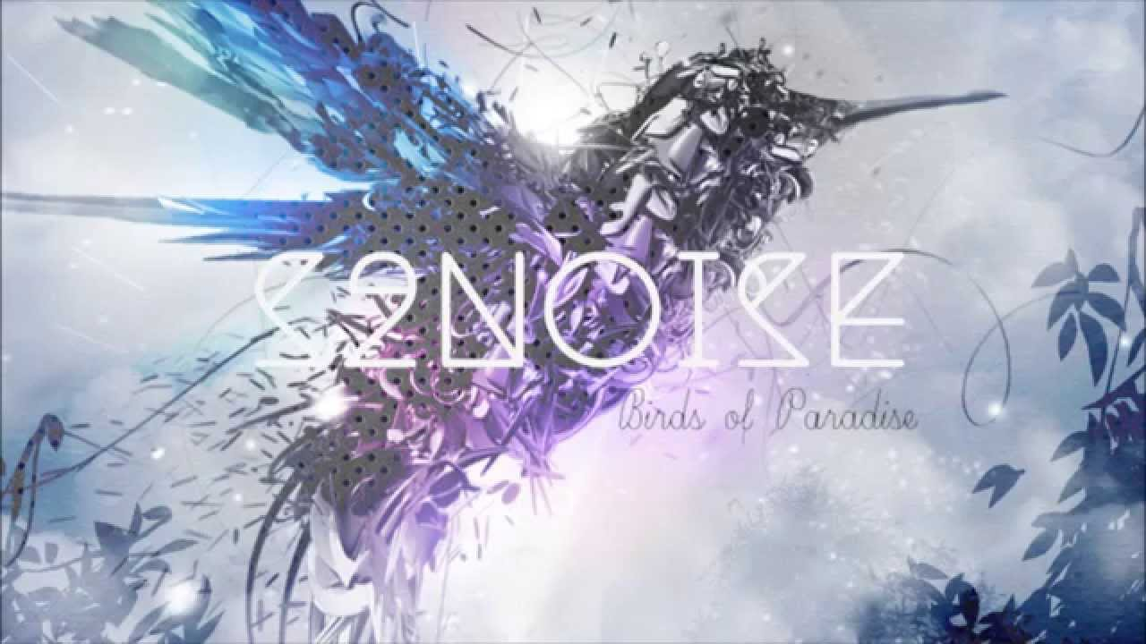 s2noise birds of paradise youtube