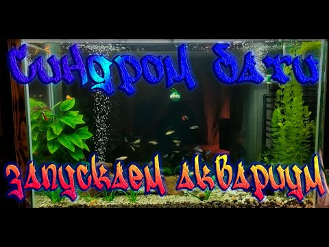 Синдром Бати - собираем и запускаем аквариум своими руками