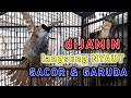 Trucukan Apapun  Nyaut Gacor Dengan Pancingan Trucukan Garuda Ini  Mp3 - Mp4 Download