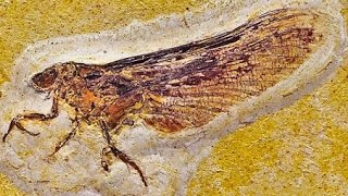 12 Amazing Fossil Discoveries