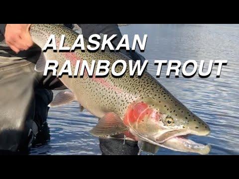 Fly Fishing Royal Coachman & Copper River Lodges - Alaska