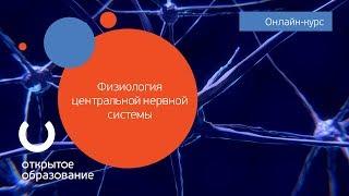 Физиология центральной нервной системы / МГУ имени М. В. Ломоносова