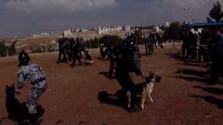Police Dogs & Handlers In Training For Public Disorder Deployment Within The Middle East
