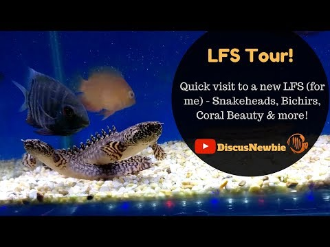 Local Fish Store Tour - Maidenhead Aquatics, Chesterfield