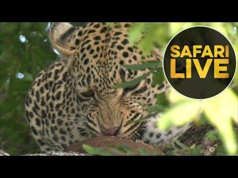 safariLIVE - Sunrise Safari - July 17, 2018