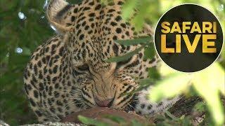 safariLIVE - Sunrise Safari - July 17, 2018 thumbnail