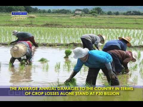 Cong  Yap Pushing For Stronger And Modern Insurance System For Farmers   Bizwatch