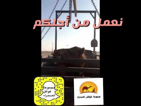 Photo of مجموعة قوافل الصحراء نقل أبل – ايفون