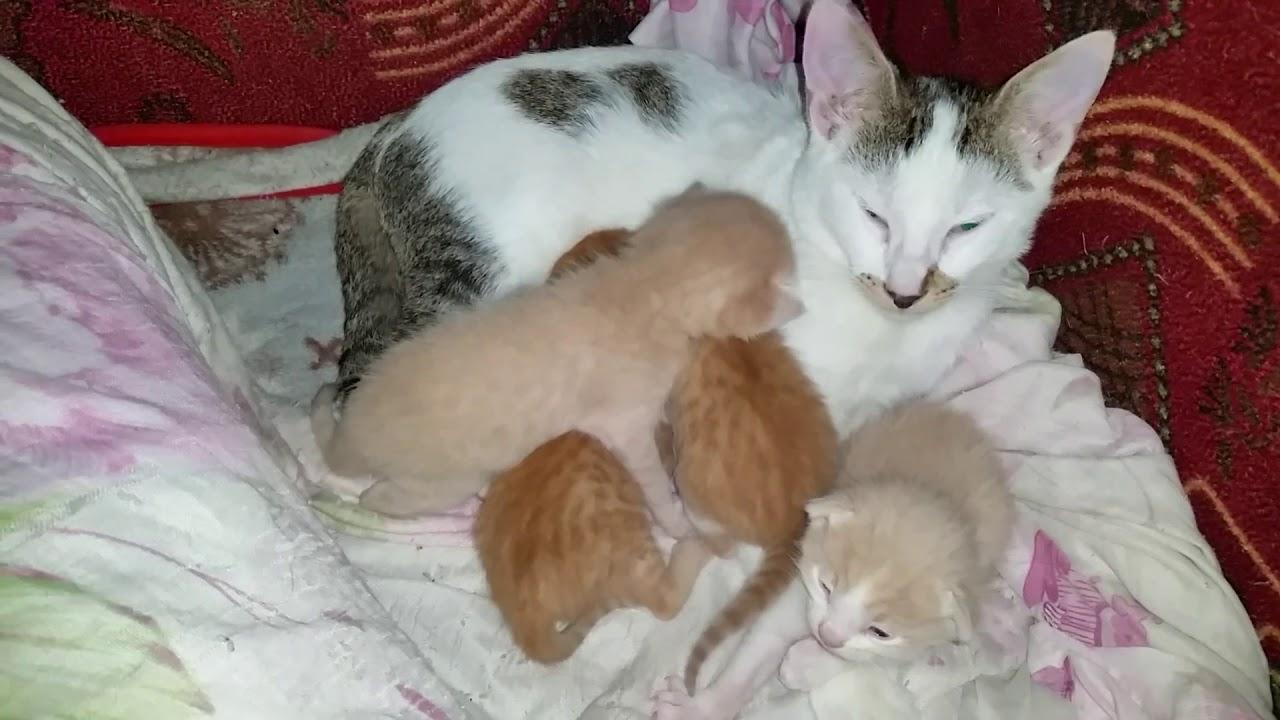 قط يرعى ويحرس اخوته الصغار اثناء غياب الأم وحين تعود الأم تقبله بحرارة شاهد