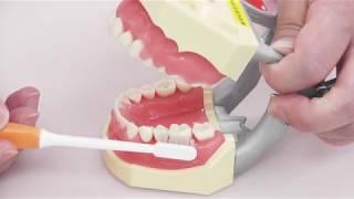 進路研究動画 歯科衛生士コース スクラビング法