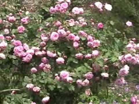 Weißer Garten Sissinghurst sissinghurst castle gardens