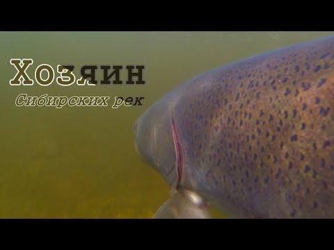 Самая опасная рыба