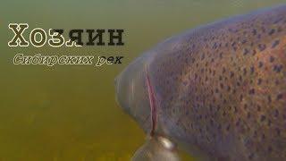 Самая опасная рыба Сибирских рек/Подводная съемка/Рыбалка в Тыве #5/Горное озеро/щука окунь таймень