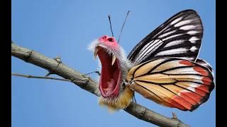 Бабочки. Прикол, ржака, песенка  весёлого засранца.