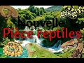 Mes nouvelles installations, new reptile room