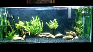 finnex planted 24 7 led aquarium light demo