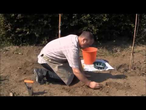 Comment planter des bulbes floraison printani re youtube - Bulbes a floraison automnale ...