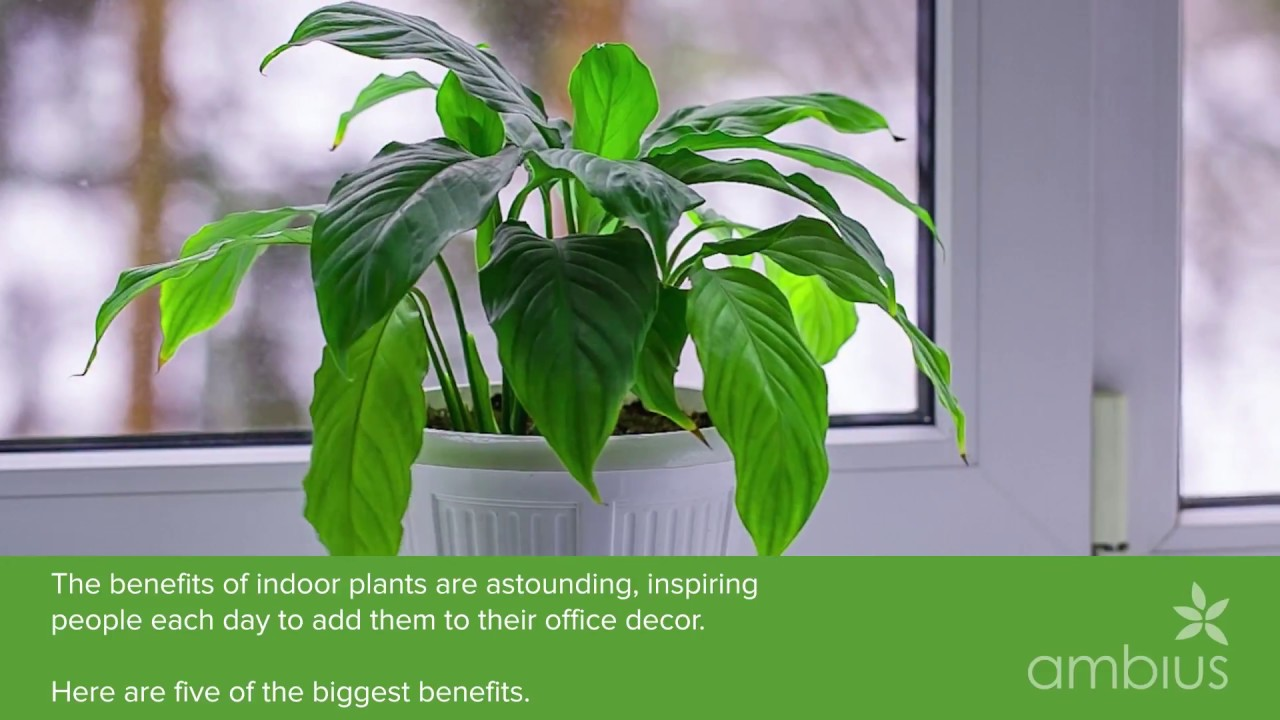 Indoor Plants For The Office The 5 Benefits Of Indoor Plants For Your Business
