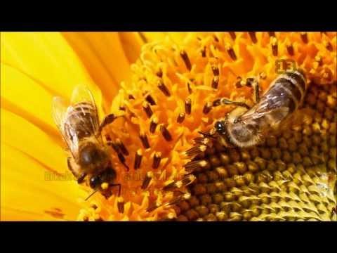 Arılar ve Bal Hakkında Daha Önce Duymadığınız 15 Harika Bilgi