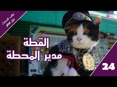 """""""القطة مدير المحطة"""" - غرائب الاحداث والأخبار حول العالم   حلقة 24"""