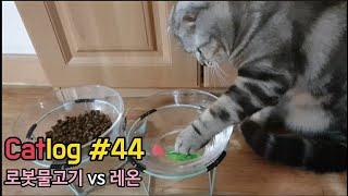 냥라이프_로봇물고기와고양이