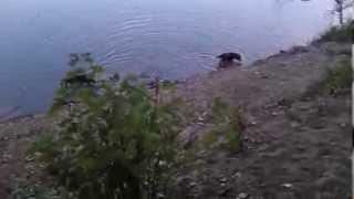 Boni Beagle Hétvégi Kirándulása A Tisza Parton