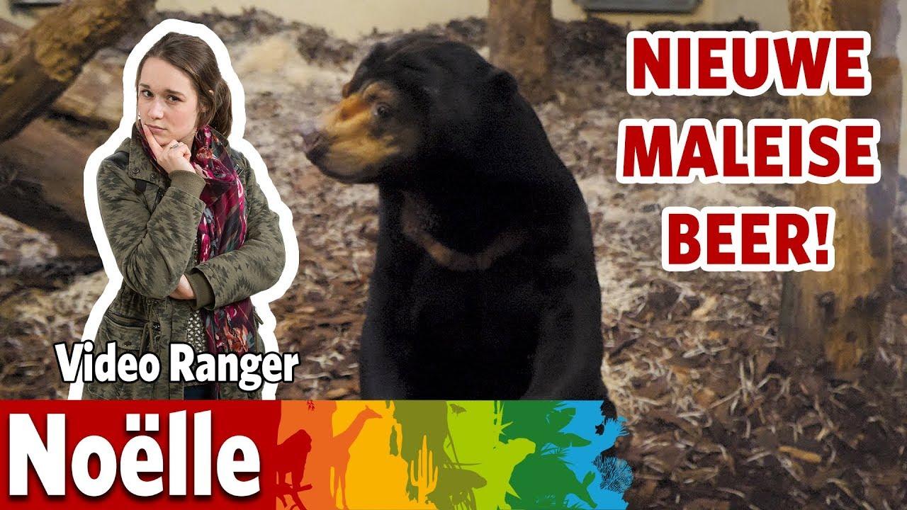 Een nieuwe Maleise berenman in Burgers' Rimba 🐻