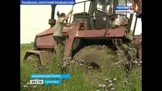 Вести-Хабаровск. Экстренная заготовка кормов