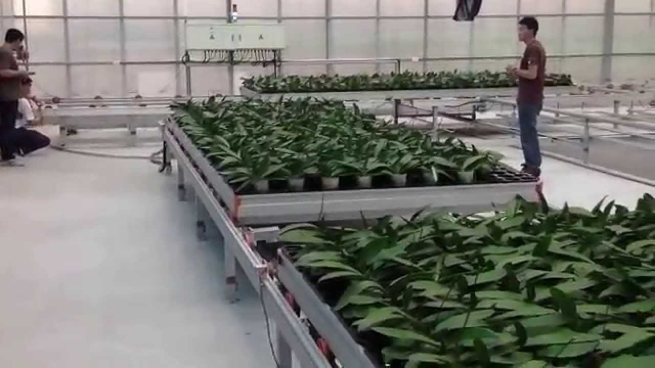 Greenhouse Rolling Bench - YouTube